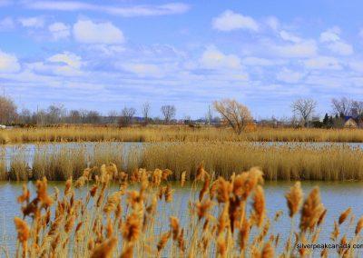 SilverPeak-Studios-Canada-Wildlife-Photography-Rick-Schroeter-Birds-Landscape-Photos-Sarnia-Ontario (1)