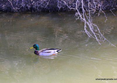 SilverPeak-Studios-Canada-Wildlife-Photography-Rick-Schroeter-Birds-Landscape-Photos-Sarnia-Ontario (3)