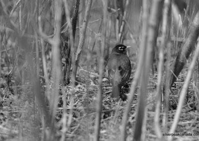SilverPeak-Studios-Canada-Wildlife-Photography-Rick-Schroeter-Birds-Landscape-Photos-Sarnia-Ontario (6)